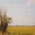 3. das Pisselberger Land.jpg